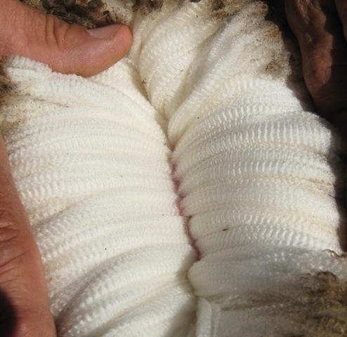 BDRSSE 14 Wool